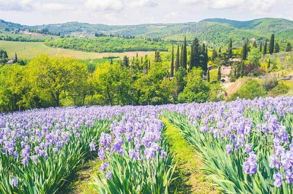 Giaggioli Are In Bloom – Chianti Excursion